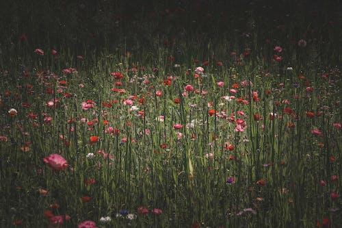 乾草地, 乾草田, 增長 的 免费素材图片