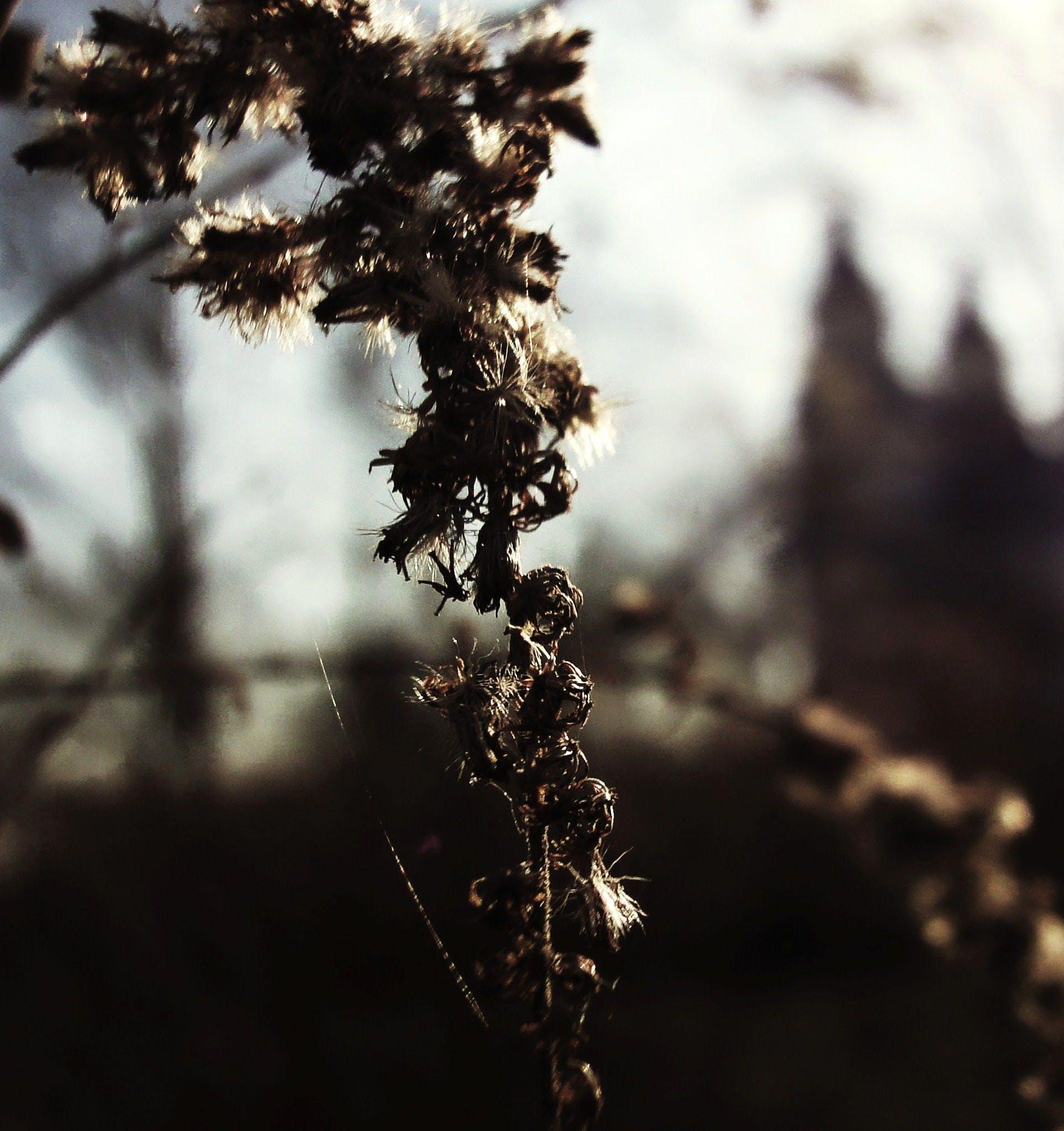 Free stock photo of sun, plants, church