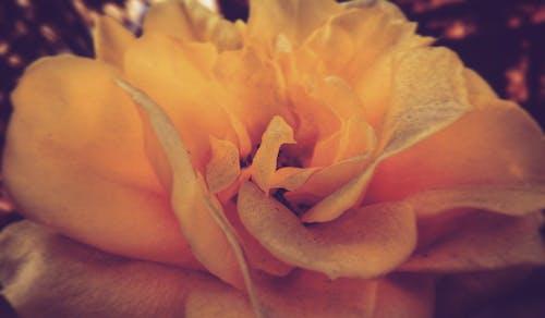 aşık, Aşk, Bahçe, bitki içeren Ücretsiz stok fotoğraf
