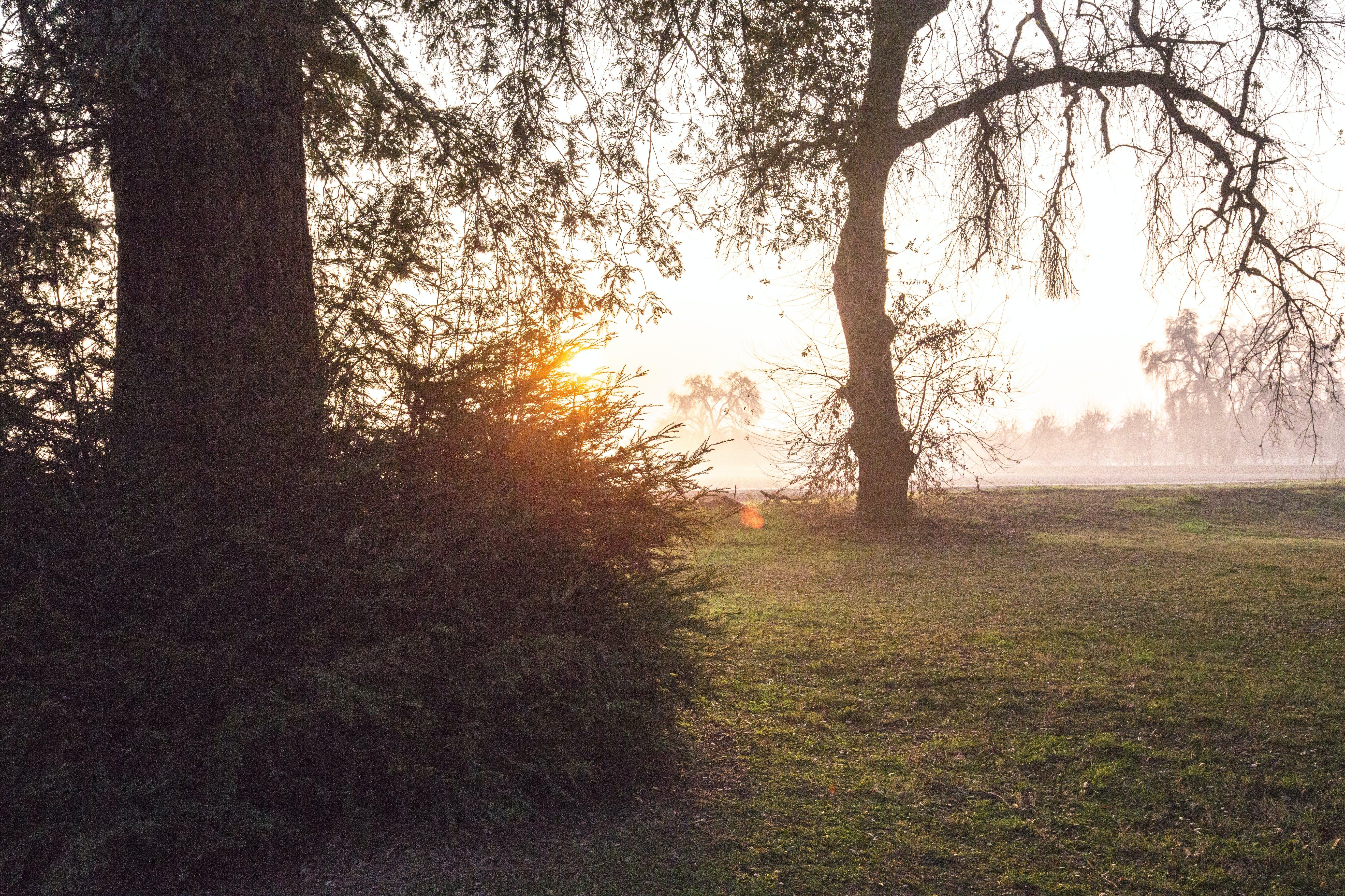 Free stock photo of park, sunrise, trees