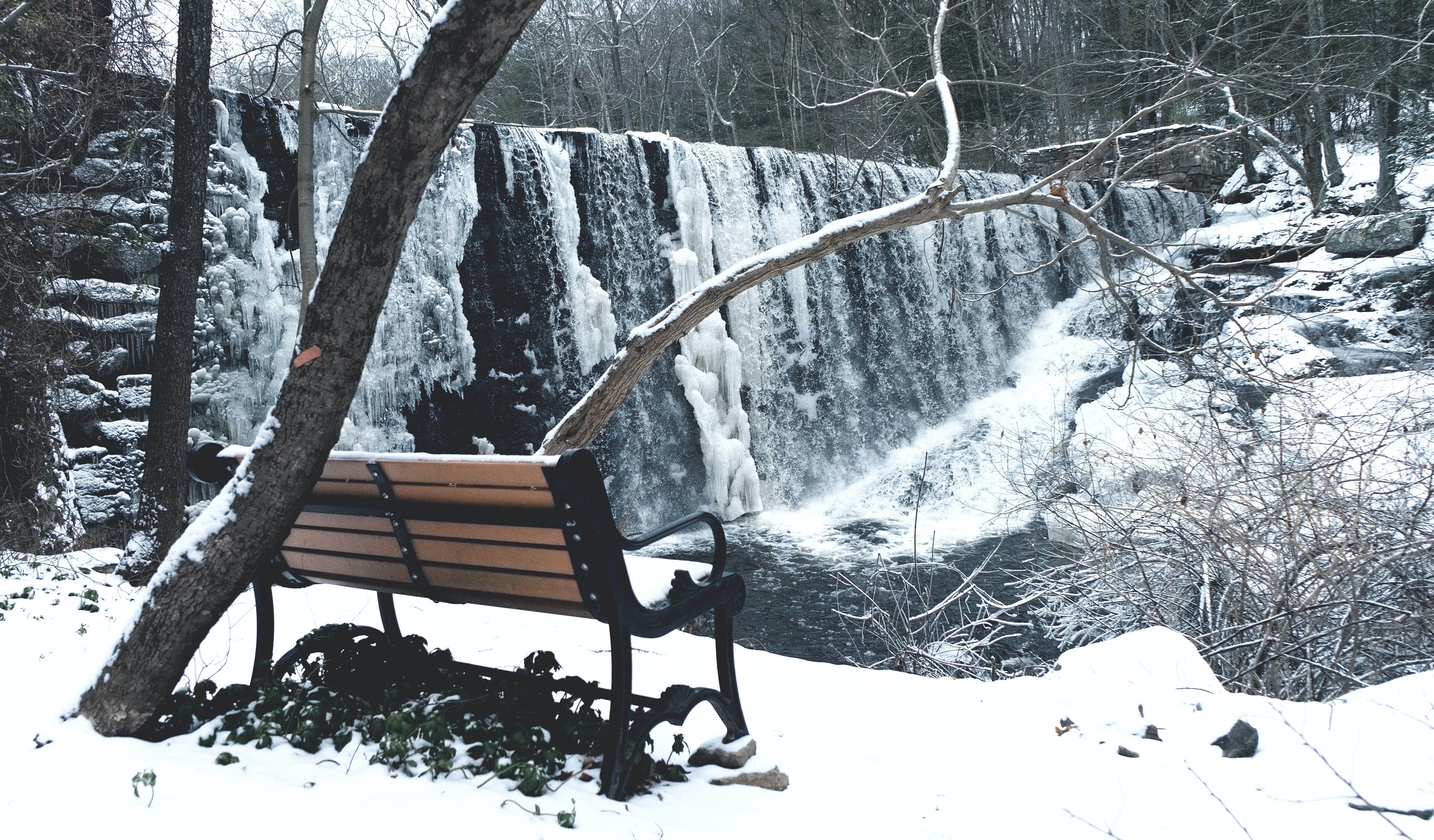 Kostenloses Stock Foto zu äste, bäume, cool, einfrieren