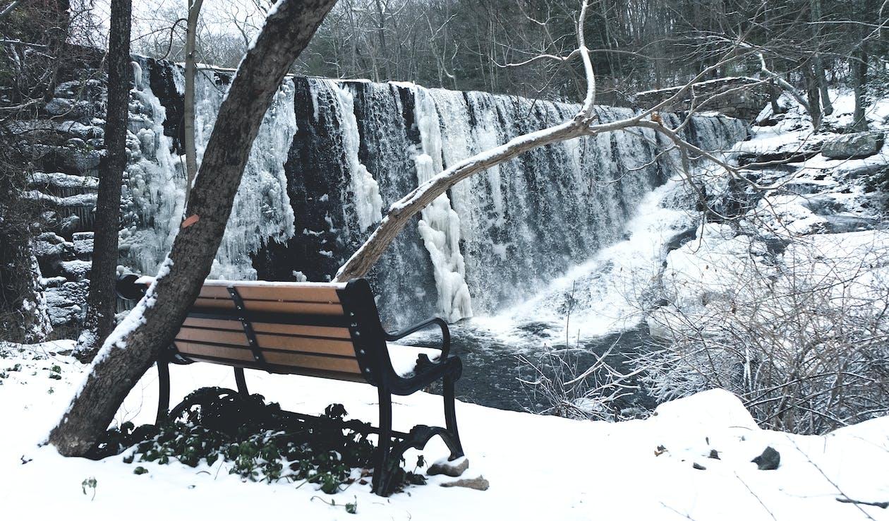 băng, băng giá, cây