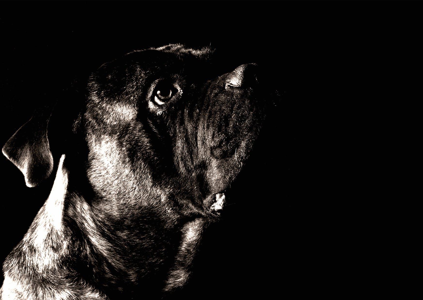 Ảnh lưu trữ miễn phí về cận cảnh, Chân dung, chó, con vật