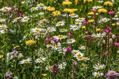 Darmowe zdjęcie z galerii z dziki, flora, jasny