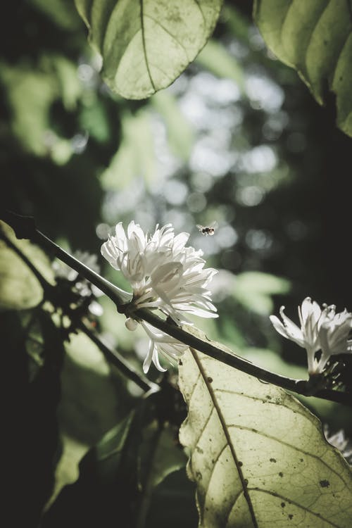 Free stock photo of bee, bloom, bokeh