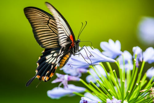 Close-Up Shot of a Butterfly Perched on Blue Flowers
