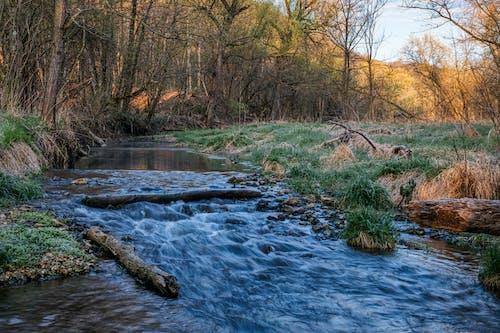 Foto stok gratis air, air terjun, aliran