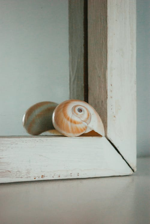 Close-Up Photo of a Brown Seashell on the Edge of the Mirror