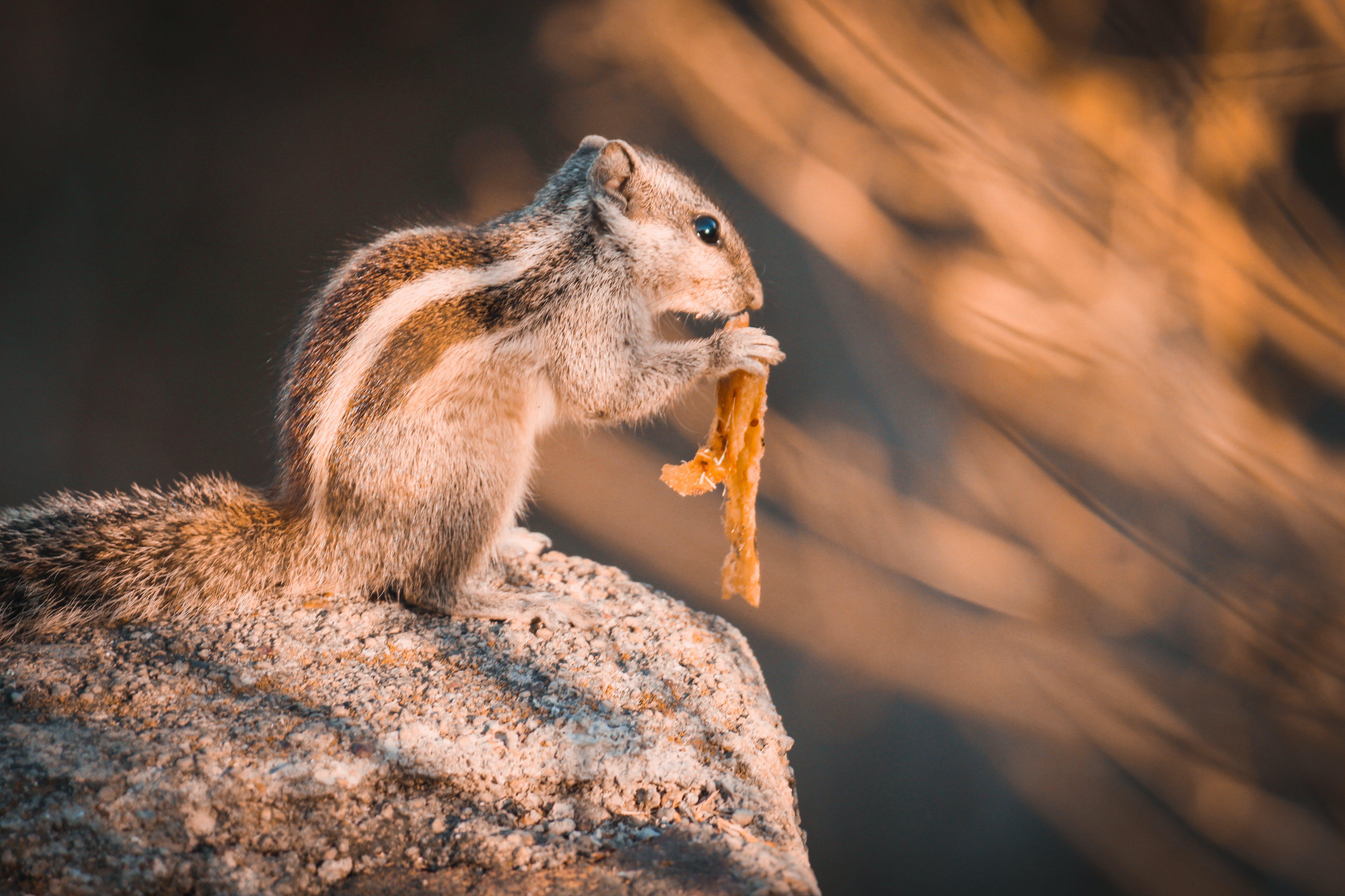 Ingyenes stockfotó állat, aranyos, egészséges étkezés, élelmiszer témában