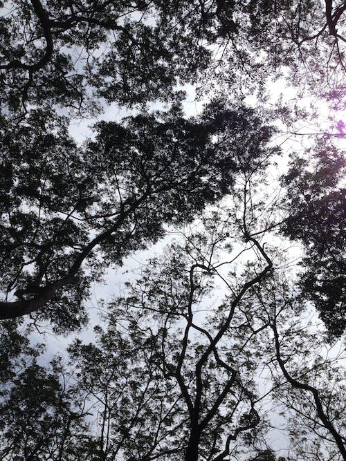 Free stock photo of shade, trees