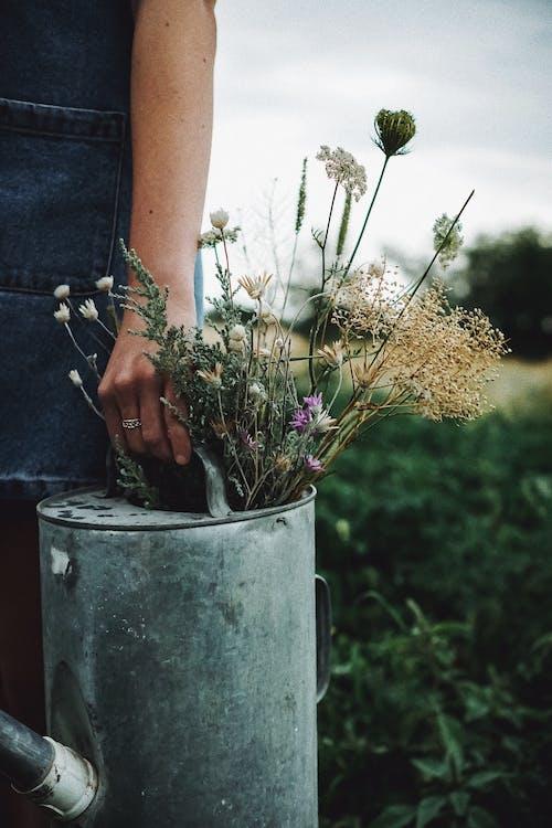 Foto stok gratis alam, bidang, bunga-bunga