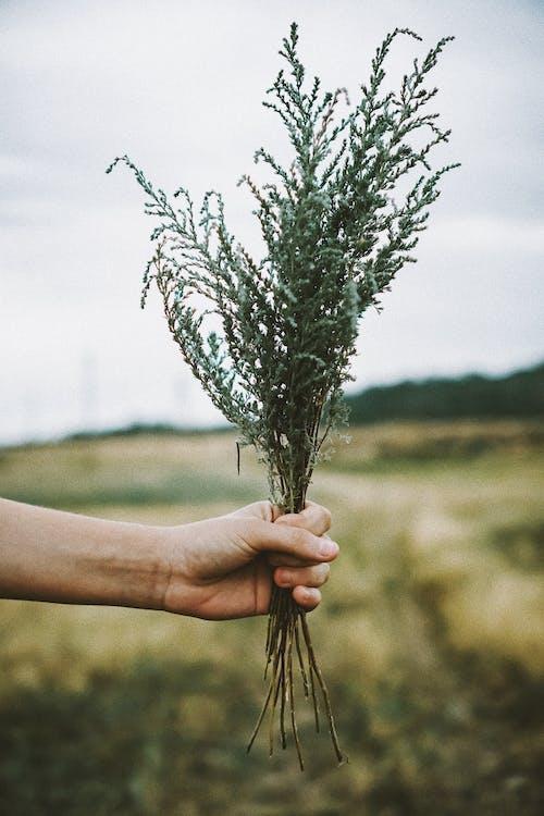 Foto stok gratis alam, bidang, gelanggang