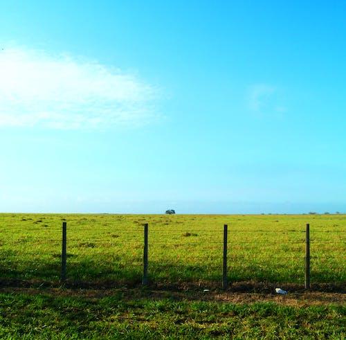 Foto stok gratis bidang, hijau, lahan pertanian, langit