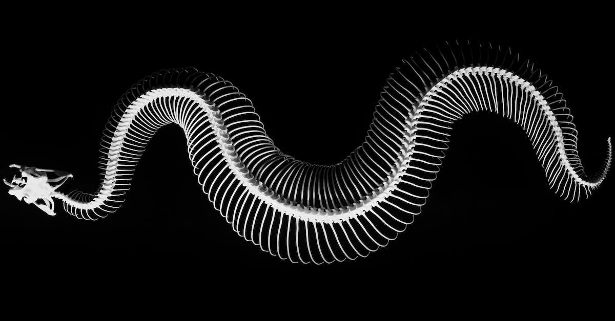 Скелет змей картинки
