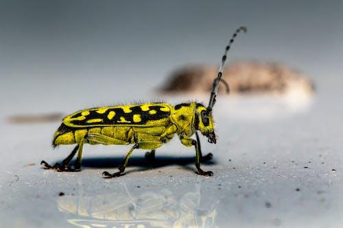Macro Shot of a Longhorn Beetle