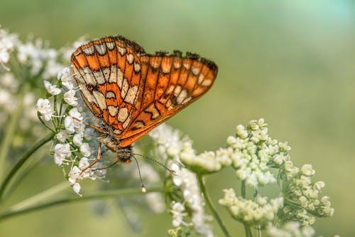 Macro Shot of an Orange Butterfly