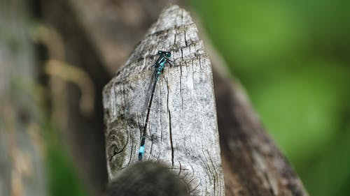 Macro Photography of a Blue and Black Dragonfly on Wood