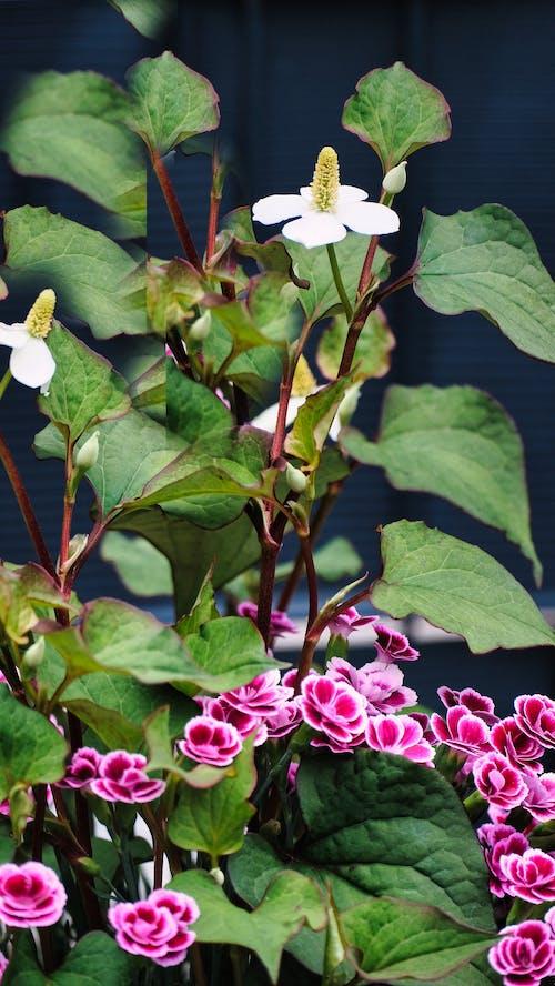 Blooming Flowering Plant