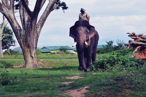 Photos gratuites de #karnatakatourisme, #tusker @elephant #patrollingwithelephant