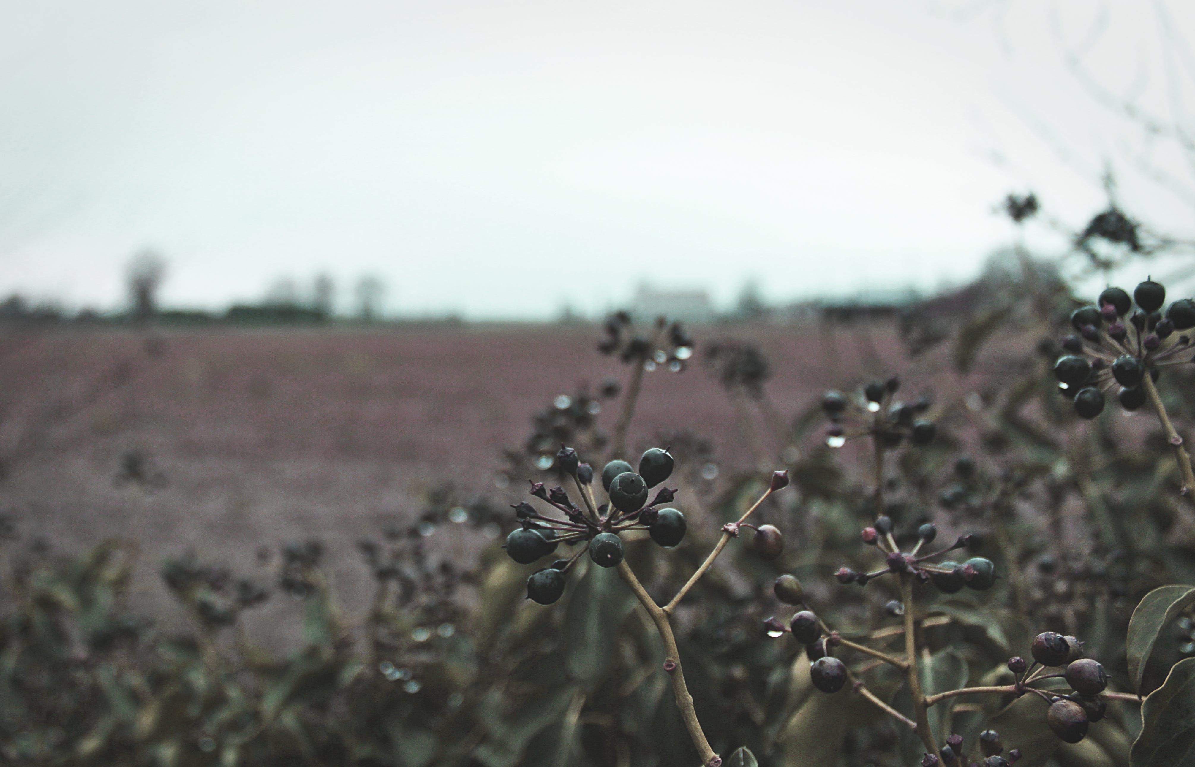 Drop in Water on Black Fruit