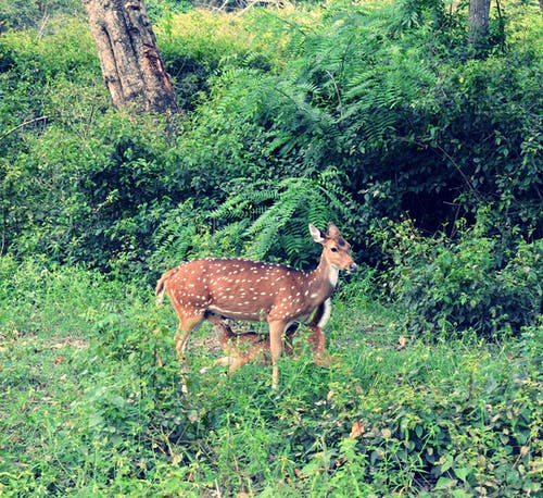 #forest #breastfeeding #deer의 무료 스톡 사진