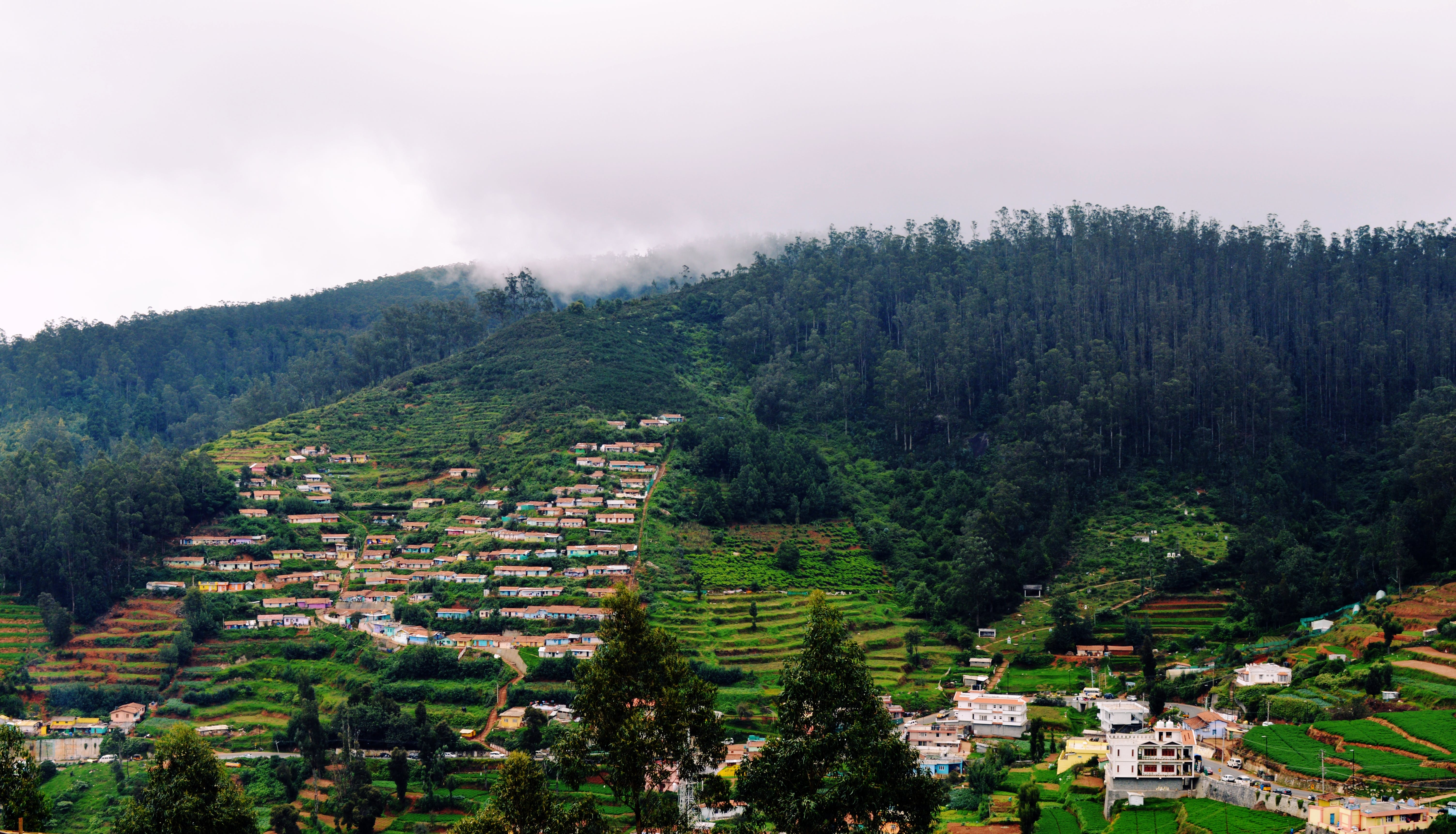 Free stock photo of #ooty
