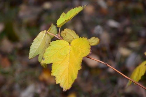 Foto d'estoc gratuïta de arbre, fulla groga, fulles, natura