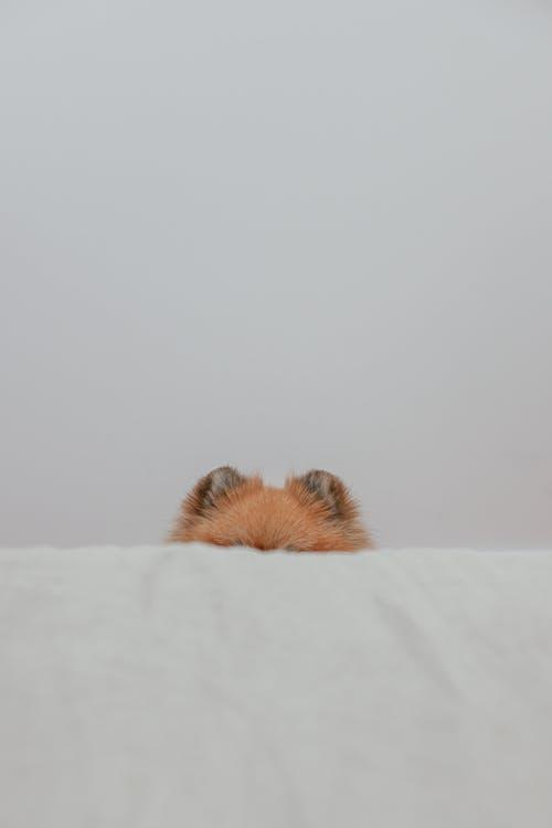 Free stock photo of animal, bird, cat