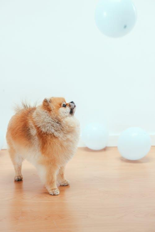 Foto profissional grátis de amante do animal de estimação, animais de estimação, animais domésticos