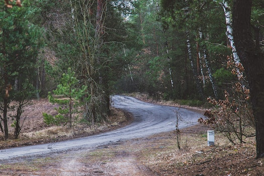 Free stock photo of road, forest, trees, woods