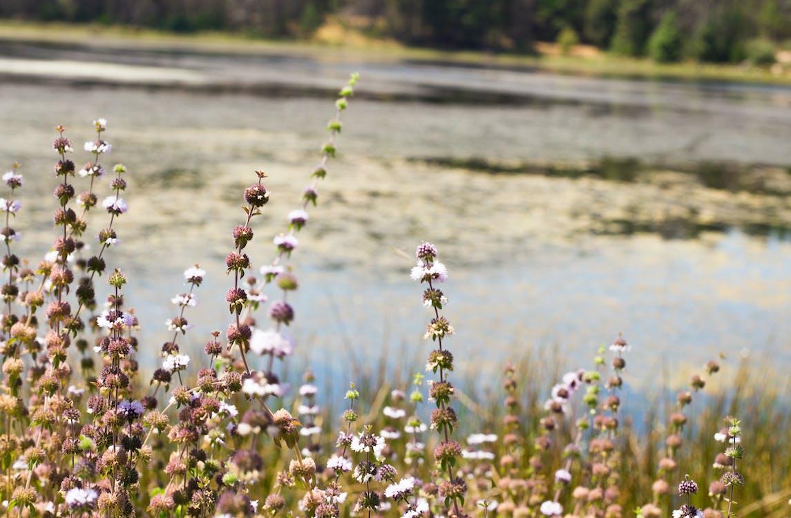 blomster, grouse valley, menneskeskapt innsjø