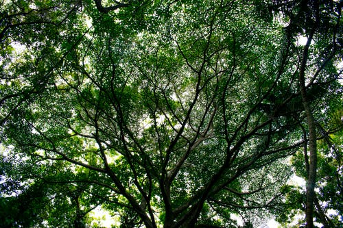 Free stock photo of branches, forest, nature, tree