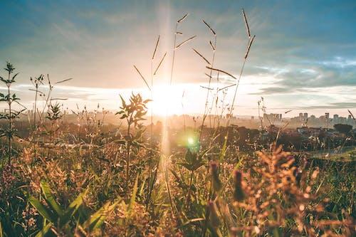 Ingyenes stockfotó ég, este, felhős ég, fű témában