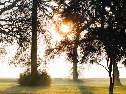 Gratis arkivbilde med park, soloppgang, tåkete, trær
