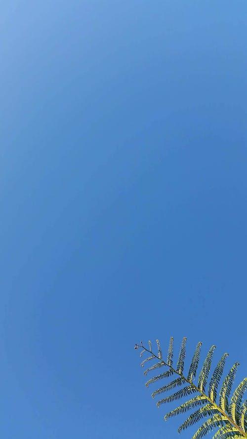 Free stock photo of blue, blue skies, blue sky, bluesky