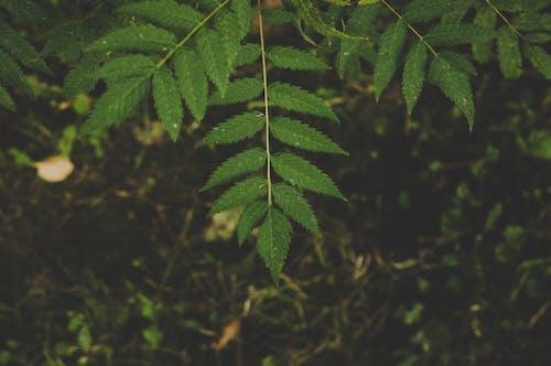 Gratis lagerfoto af grøn, natur, plante, vækst