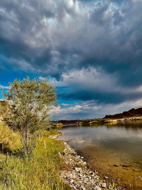 Foto d'estoc gratuïta de almaty, bell paisatge, esten erbol