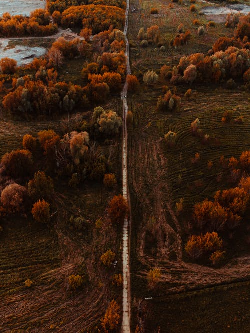 ağaçlar, arazi, drone çekimi içeren Ücretsiz stok fotoğraf