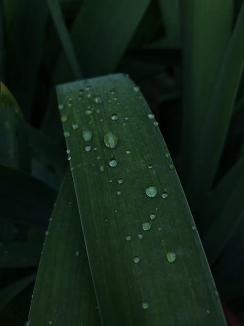 Close-Up Shot of Water Droplets on a Green Leaf