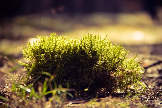 Green Plants on Brown Surface