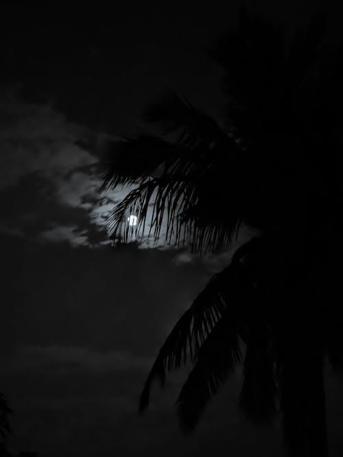 Základová fotografie zdarma na téma daleko, měsíc, strom