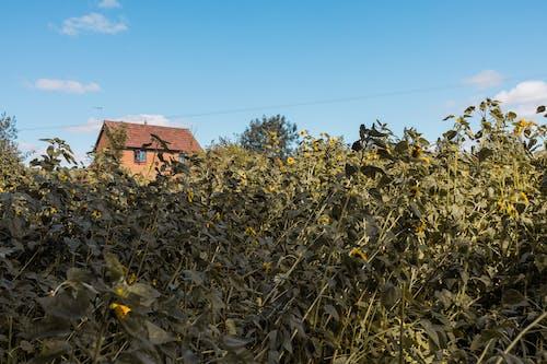Δωρεάν στοκ φωτογραφιών με αγρόκτημα, αγροτικός, ανάπτυξη