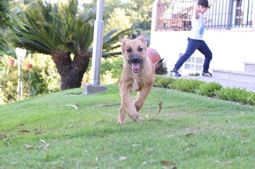 Kostenloses Stock Foto zu glück, hund, joggen