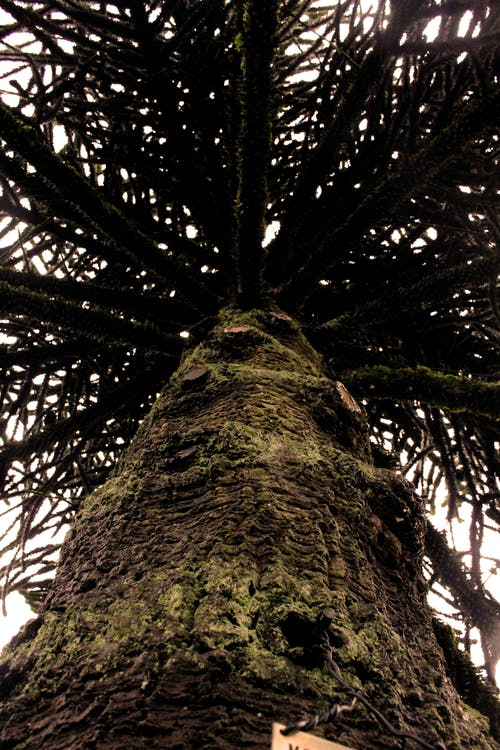 Photos gratuites de arbre, canada, jardins