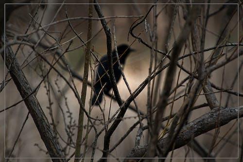シルエット, ムーディー, 森林の無料の写真素材