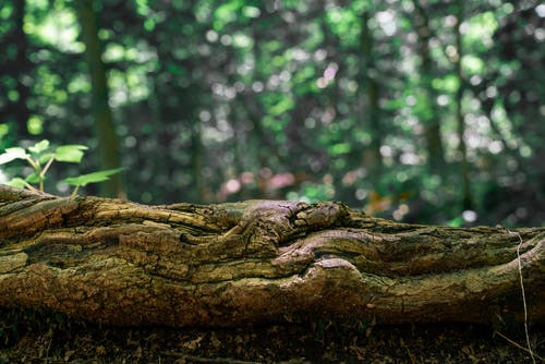 Close-Up Shot of a Tree Trunk