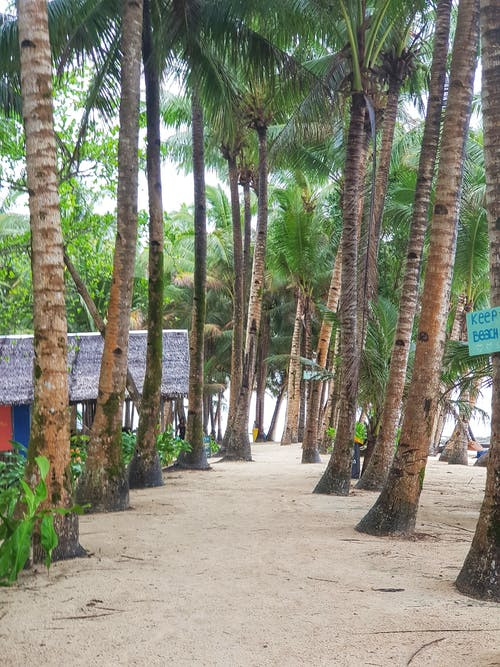 Безкоштовне стокове фото на тему «#siargao #nature #trees #beach #sand #green»