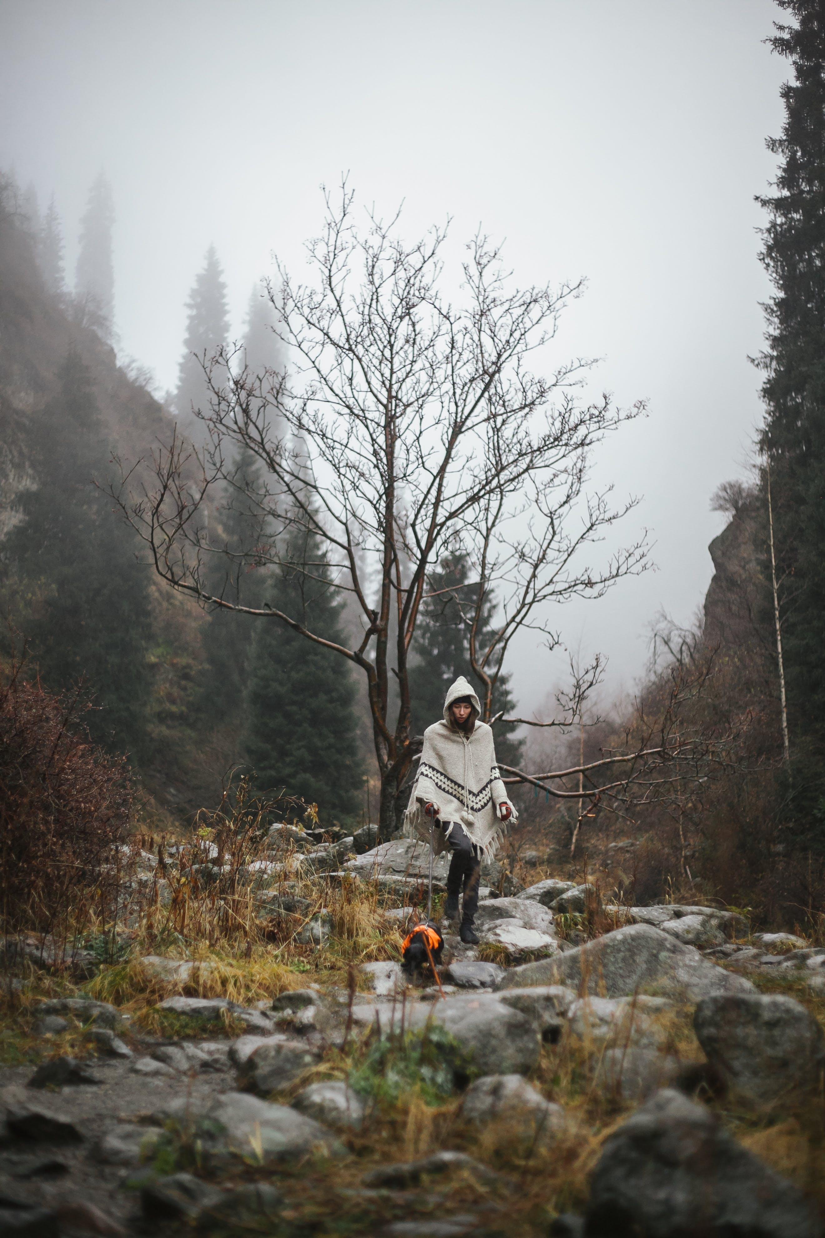Kostenloses Stock Foto zu bäume, berg, felsen, gras