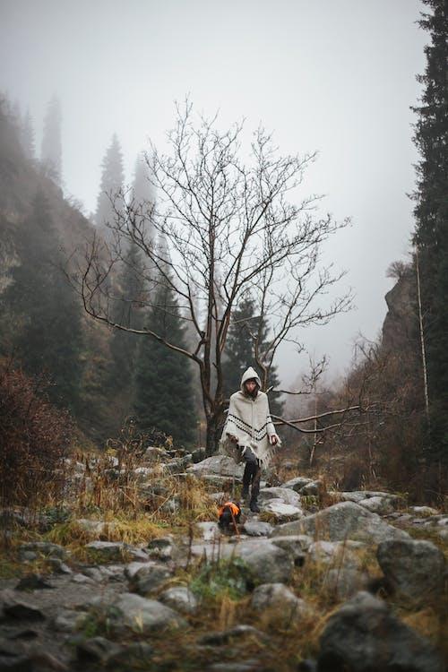 Foto d'estoc gratuïta de a l'aire lliure, amb boira, arbres, boira