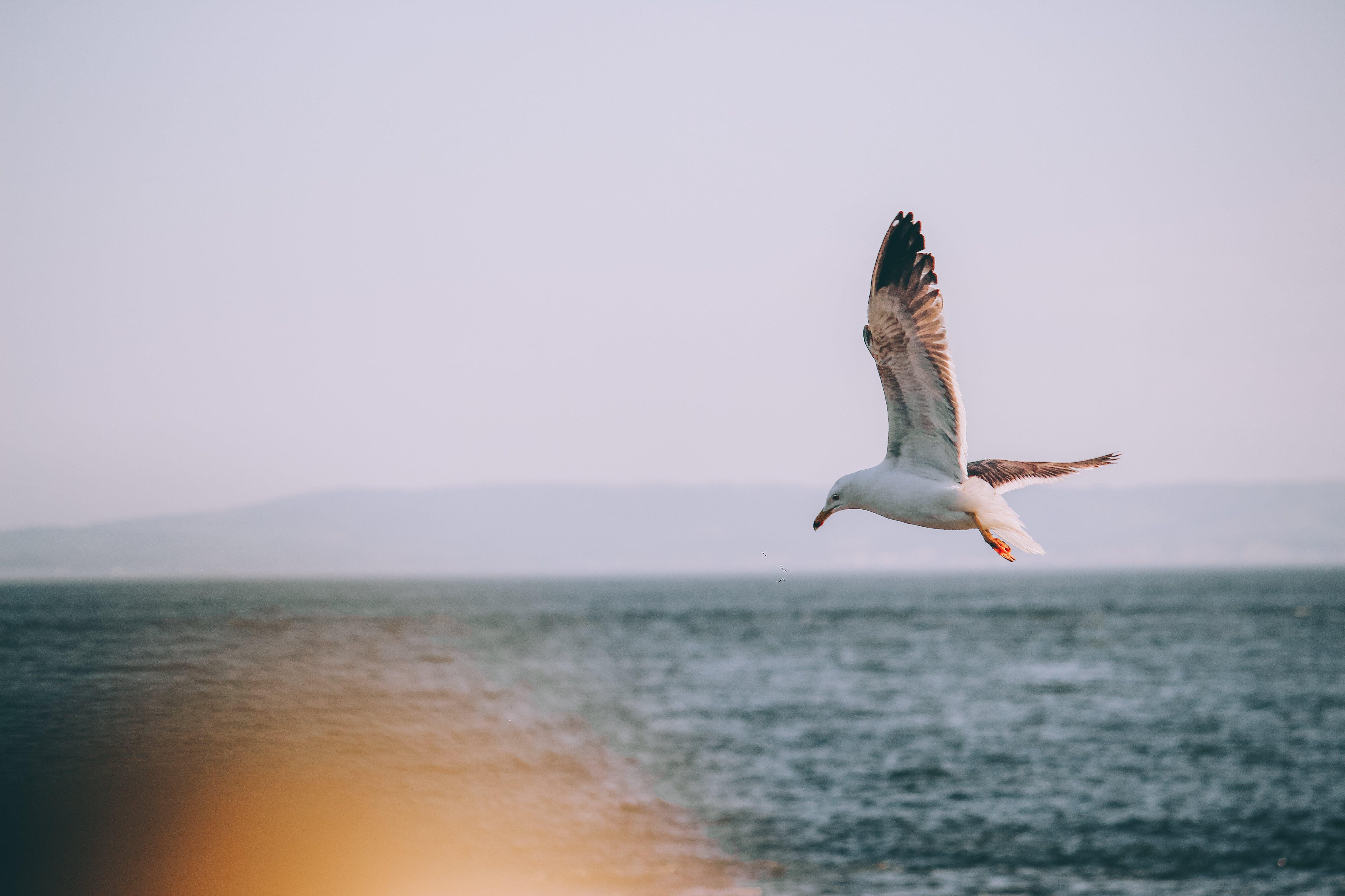 คลังภาพถ่ายฟรี ของ ความเร็วชัตเตอร์, คาร์ดิฟฟ์, ทะเล, นกนางนวล